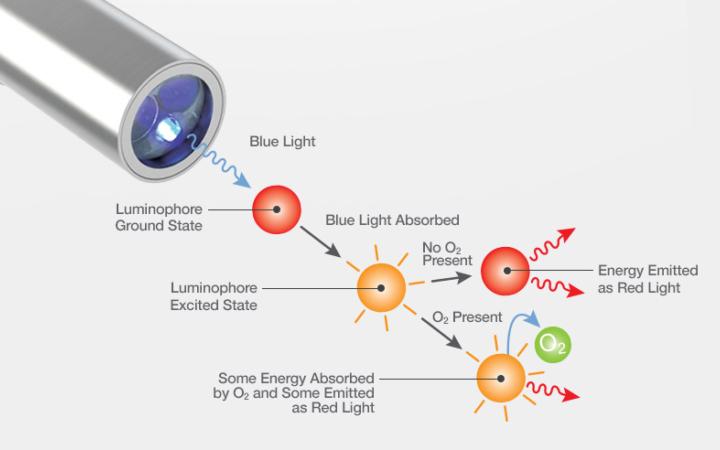 Optical Dissolved Oxygen Sensors | Process Analytics | Hamilton ...